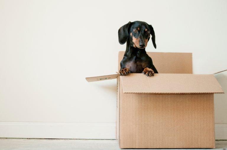 erda-estremera-581452-unsplash-768x510 Family, Estate Planning, Business and Traffic Law Legal Services | Divorce | Custody | Wills | Trusts Kernersville